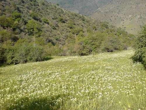 تصاویری از طبیعت ییلاق شهر آب بر موسوم به کرد داغی(بهار1386)
